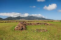 Waianae mountain range depicting pregnant woman lying on her back behind the Kukaniloko Birthstones field, Wahiawa, Oahu, Hawaii