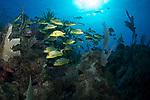Sunlit Reef scene