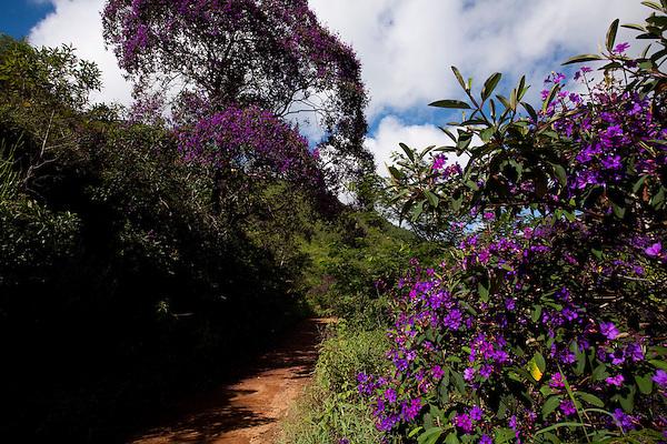 Muniz Freire_ES, Brasil...Trecho da Rota imperial em Muniz de Freire...Imperial Route in Muniz de Freire...Foto: LEO DRUMOND / NITRO