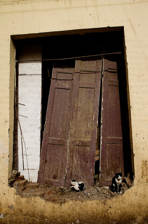 Derelict wooden doors with cats, Luxor Town, Egypt