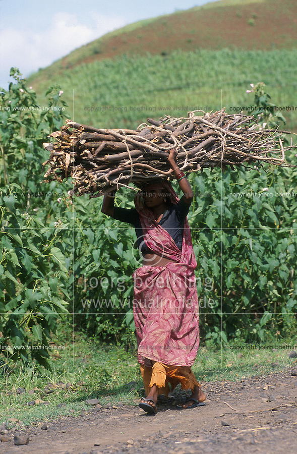 jbo11282 Asia India labour Energy power fuel woman in sari carry firewoods wood on the head from the forest.Asien Indien Energie Holz Frau trägt Feuerholz auf dem Kopf aus dem Wald Abholzung.vertical vertikal Hochformat.copyright Joerg Boethling / agenda