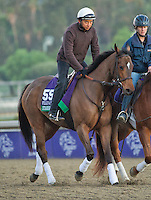 Starship Truffles, trained by Marty Wolfson, trains for the Breeders' Cup Filly & Mare Sprint at Santa Anita Park in Arcadia, California on October 30, 2013.