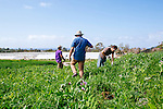 """ENCINITAS, CALIFORNIA - FEBRUARY 27: Daron """"Farmer D"""" Joffe, Director Of Agricultural Innovation And Development at Leichtag Foundation & Farmer D Consulting, works to plant trees in the 'food forest' at the Leichtag Foundation Farm in Encinitas, California, on Friday, February 27, 2015."""