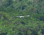 Wildlife along the Rio Dulce in Guatemala.