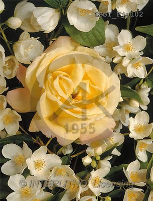 FLOWERS, portrait, macro, photos, GBST, GBSTFja102,#F# Blumen, flores, retrato