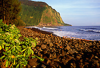View of black sand beach with people playing in the surf at the shore fronting Waipio Valley on the Hamakua Coast on the Big Island of Hawaii.