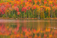 Autumn  colors reflected in Lac &agrave; Sam in the Laurentian Mountains. Great Lakes - St.  Lawrence Forest Region.<br />