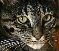 Safaris Kitten