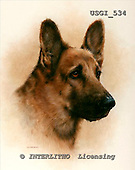 GIORDANO, REALISTIC ANIMALS, REALISTISCHE TIERE, ANIMALES REALISTICOS, paintings+++++,USGI534,#A# dogs