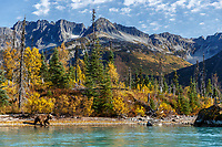 Coastal Grizzly bear walks along Crescent Lake with Chigmit Mountains in Lake Clark National Park.  Fall/Autumn <br /> Bears, Glaciers and Fall colors photo tour and workshop  September 2017  <br /> <br /> Photo by Jeff Schultz/SchultzPhoto.com  (C) 2017  ALL RIGHTS RESERVED