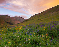 San Juan Mountains, CO<br /> San Juan range with sunset colored clouds from alpine meadow of American Basin