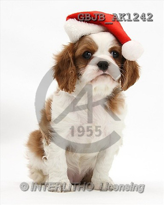 Kim, CHRISTMAS ANIMALS, photos(GBJBAK1242,#XA#) stickers
