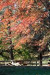 Autumn in Virgina