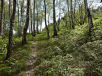 FOREST_LOCATION_90022