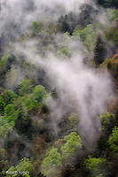 Mist rising from mountainside after spring rain, Great Smoky Mountains National Park, TN