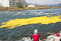 Spectators watch fifteen thousand rubber ducks are emptied in to the Sakawa River during  the Ashigara River festival, Kintaro duck-race in Matsuda, Kanagawa, Japan April 25th 2010