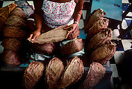 Cuba, March 1992: Selecting the Tobacco leaves for wrapping the cigar in La Corona, The largest Cigar factory in Havana.