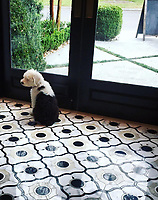 Liza Jane the Old English Sheepdog is the official mascot of Simmer & Soak showroom on St. Simons Island. She matches our Wesley Petite mosaic perfectly.