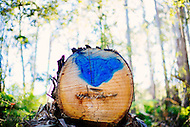 Image Ref: YV183<br /> Location: Toolangi State Forest<br /> Date: 03 Jan 2015