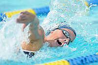 14 January 2012:  FIU's Johanna Gustafsdottir competes in the 500 yard freestyle as the FIU Golden Panthers won the meet with the Central Connecticut State University Blue Devils at the Biscayne Bay Campus Aquatics Center in Miami, Florida.