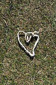England. A heart shape from a piece of string.