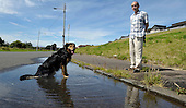 as temperatures soared across Scotland - in Glasgow's east end Alsatian cross Max decided on cooling down in a water pool (the result of a leaking pipe) as dog owner James Smith looked on - picture by Donald MacLeod - 09.8.12 - 07702 319 738 - clanmacleod@btinternet.com - www.donald-macleod.com