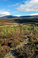 BNPS.co.uk (01202 558833)<br /> Pic: GeoffAllan/BNPS<br /> <br /> Ryvoan Bothy in the Cairngorms.<br /> <br /> Wilderness walks - new book takes you down paths less travelled in the beautiful Scottish highlands.<br /> <br /> The stunning photos reveal Scotland's best remote walks, and also provide a rudimentary roof over your head at the end of the day. <br /> <br /> Geoff Allan has spent over 30 years travelling the length and breadth of the scenic country, passing through idyllic and untouched landscapes.<br /> <br /> The routes he has selected feature secret beaches, secluded glens, hidden caves and mountains.<br /> <br /> They also include bothies - remote mountain huts - which provide overnight shelter in the wilderness.<br /> <br /> Geoff has listed his top 28 trails complete with GPS maps and descriptions in his book Scottish Bothy Walks.