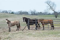 Horses on South Farm