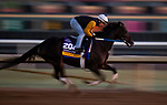 OCT 27: Breeders' Cup Distaff entrant Midnight Bisou, trained by Steven M. Asmussen, gallops at Santa Anita Park in Arcadia, California on Oct 27, 2019. Evers/Eclipse Sportswire/Breeders' Cup
