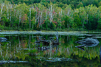 Lilypad Pond, High Peaks Wilderness Area, Adirondack Forest Preserve, New York