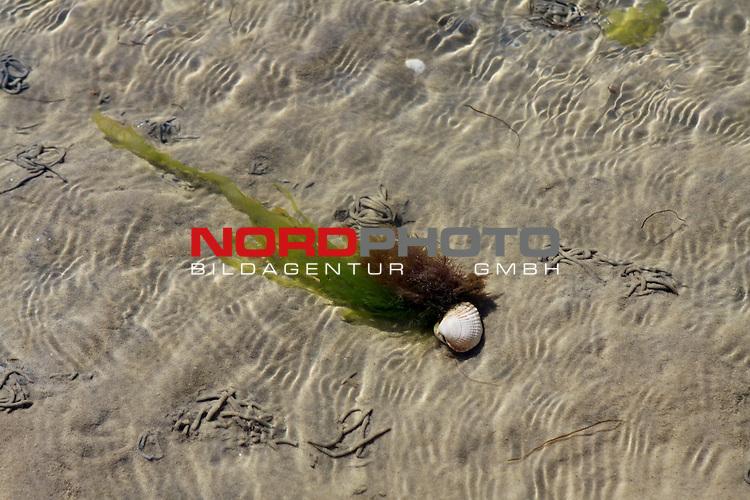 09.08.2013, Nordseeinsel Amrum, GER, im Bild Algen und Muscheln im Watt, Foto © nph / Kohring