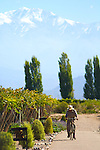 A vineyard worker at the Cavas Wine Lodge in Mendoza, Argentina, takes a stroll through the vineyard.