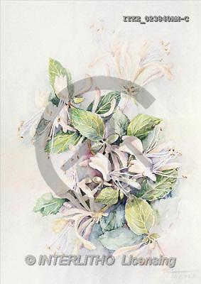 Isabella, FLOWERS, paintings(ITKE023840AM-C,#F#) Blumen, flores, illustrations, pinturas ,everyday
