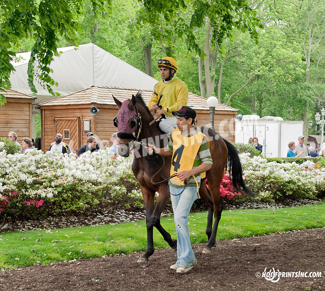 Maddy's Dance before The Our Mims Stakes at Delaware Park on 5/18/13