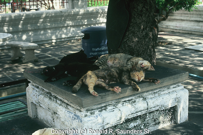 CATS NAP IN SHADE ON PLATFORM IN THAILAND