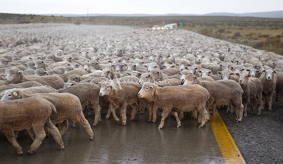 As we drove toward Torres del Paine we encountered a road block: 30,000 sheep traveling the highway!