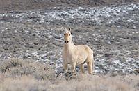 Horses - Wild - Winter