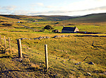 Late afternoon crofting landscape Wethersta, Mainland, Shetland Islands, Scotland