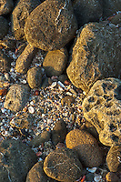 Shells, pebbles and rocks  softly lit by evening sun on Tamarindo Beach in Costa Rica.