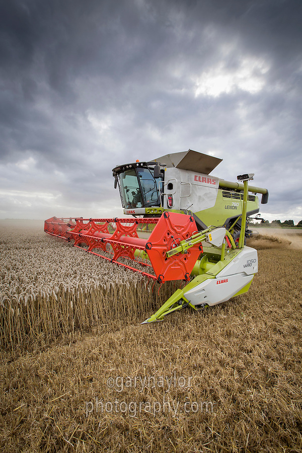 Combing winter wheat with a Claas Lexion 760 - Lincolnshire, September