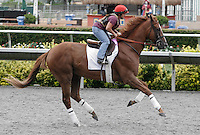 Dullahan at morning workouts at Del Mar Race Course in Del Mar, California on August 25, 2012.