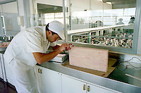 Technician checking production of frozen fish
