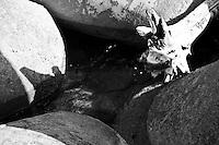 Castro Marina - Salento - Puglia - Un tronco portato dal mare si è incagliato tra i frangiflutti di cemento.