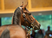 HIP 010, by Bernardini out of Nataliano, $600,000.