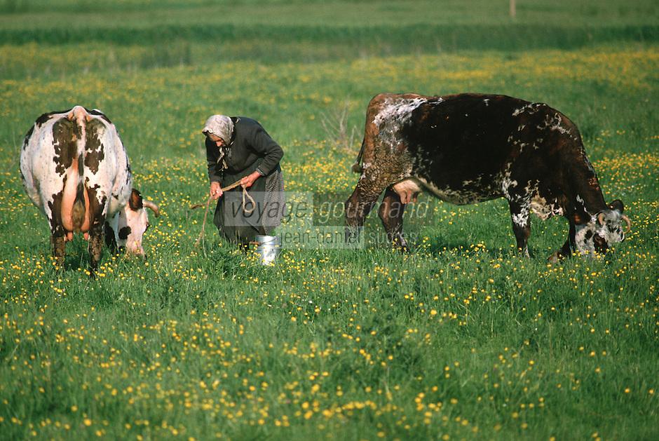 Europe/France/Pays de la Loire/85/Vendée/Env de Beauvoir-sur-Mer: Marais bretons vendéens - Paysanne et vaches<br /> PHOTO D'ARCHIVES // ARCHIVAL IMAGES<br /> FRANCE 1990