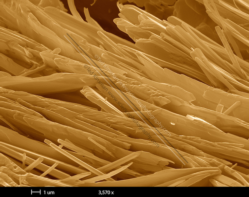 Scanning Electron Microscope (sem) image of crack cocaine.  the calibration bar is 10 um and the magnification is 802x.
