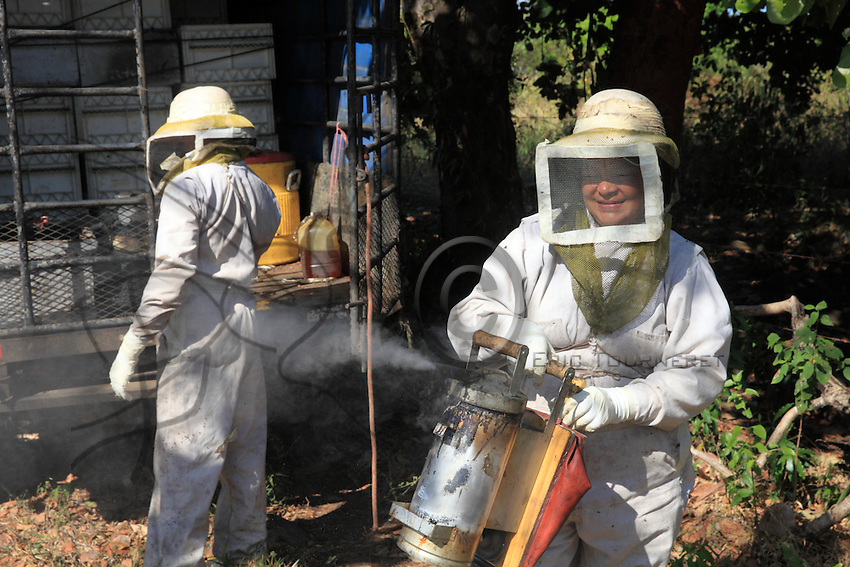 Before opening the hive, the giant smoker from Brazil goes into action. <br /> The varroa mite, a parasite for bees, is better tolerated by the Africanized bees because they manage to delouse themselves and also because they regularly change their habitat, which limits growth of the varroa population.///Avant l&rsquo;ouverture d&rsquo;une ruche, l&rsquo;enfumoir g&eacute;ant d&rsquo;origine br&eacute;silienne entre en action.<br /> Le varroa, le parasite des abeilles est beaucoup mieux tol&eacute;r&eacute; par les abeilles africanis&eacute;es car elles arrivent &agrave; s&rsquo;&eacute;pouiller et aussi car elles changent d&rsquo;habitat r&eacute;guli&egrave;rement ce qui  limite la croissance des populations de varroa.