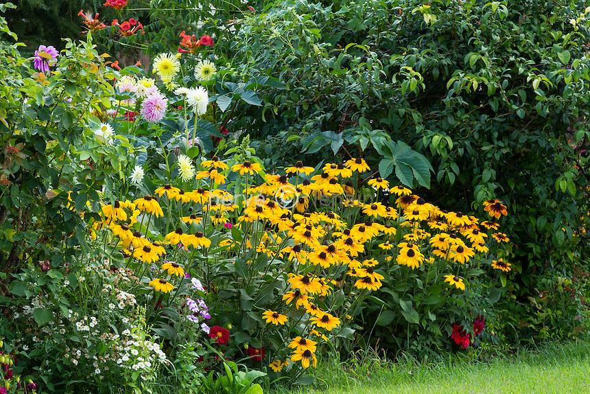 Rudbeckia, Dahlia, Petunia, Ricinus