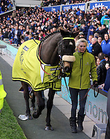 Pictured: One of the Grand National horse winners is paraded around the stadium at half time. Saturday 22 March 2014<br />