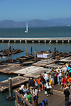 Tourists at Pier 39 with CA sea lions